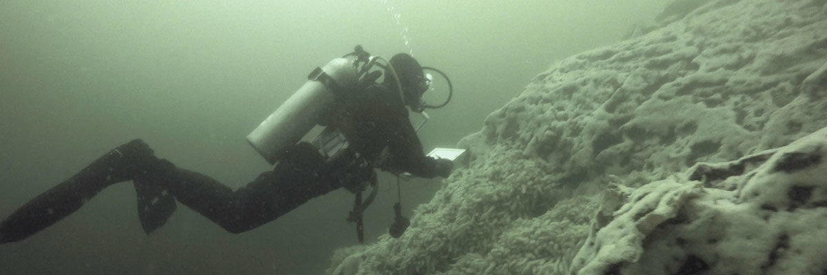Markus Thompson dives with tanks to survey herring spawn.