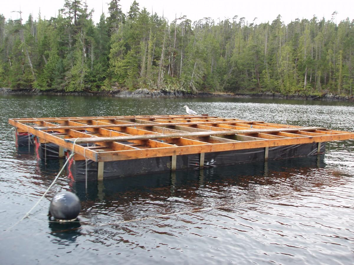 An aquaculture setup with a seaugull perched upon it