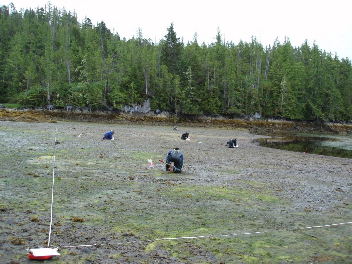 A group of people studying clams along the shore