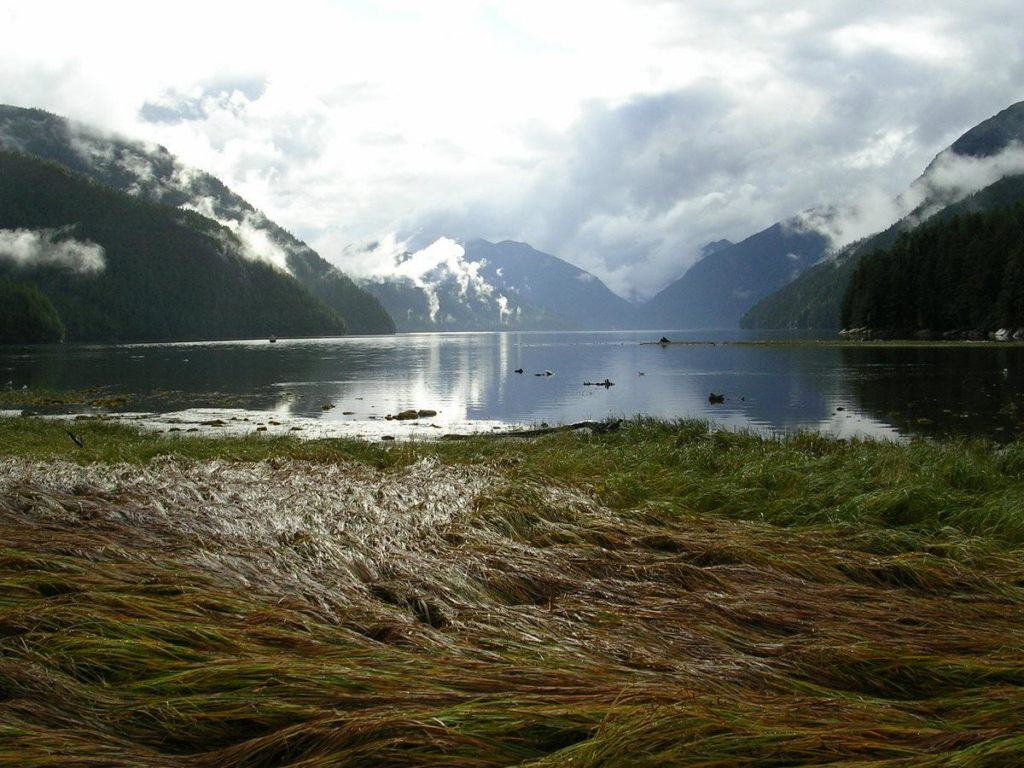 An estuary with long grasses in the foreground and mountains in the background