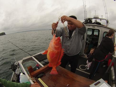 A person on a boat holding a caught rockfish