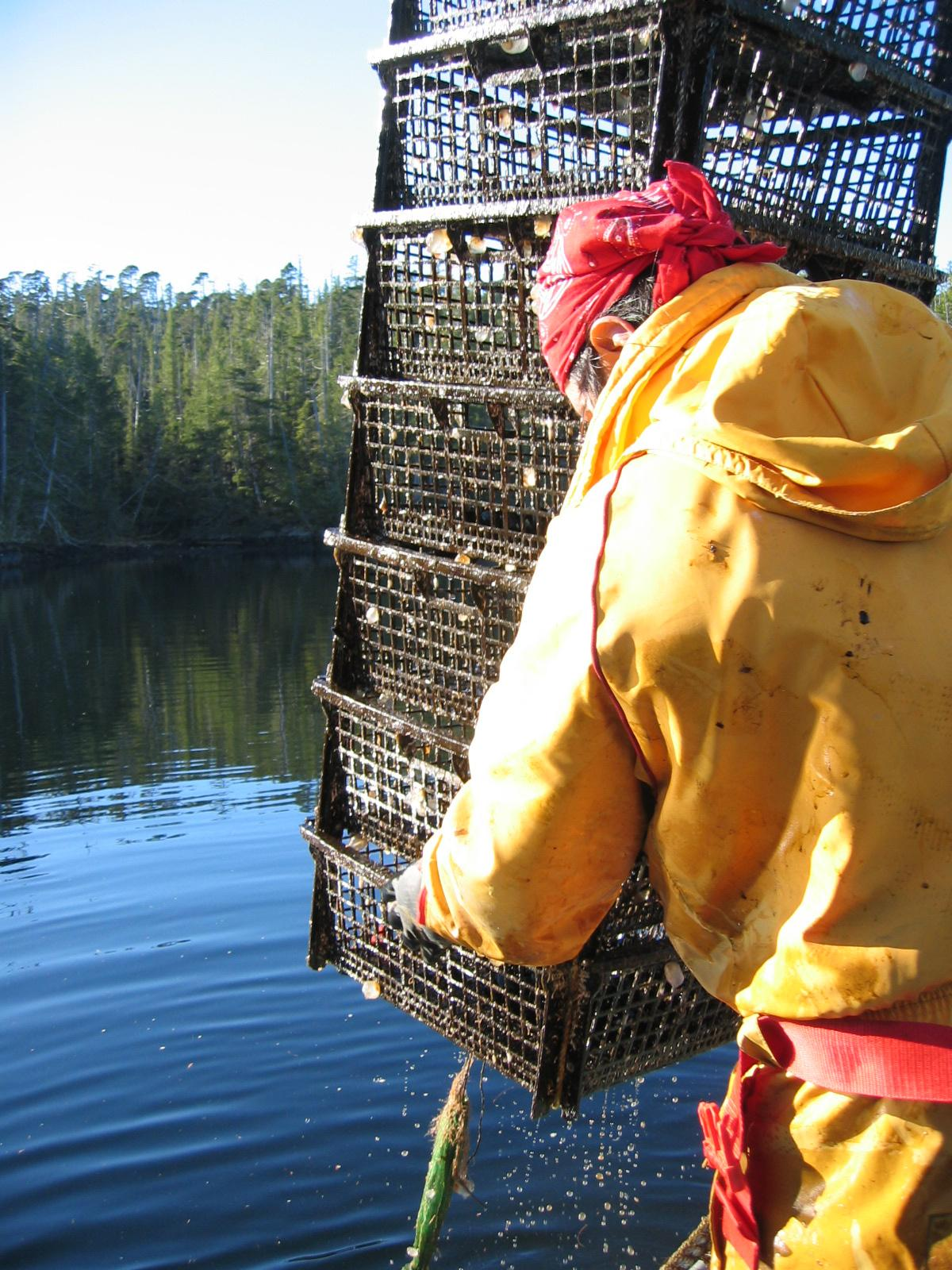 A person lifting a shellfish trap out of the water