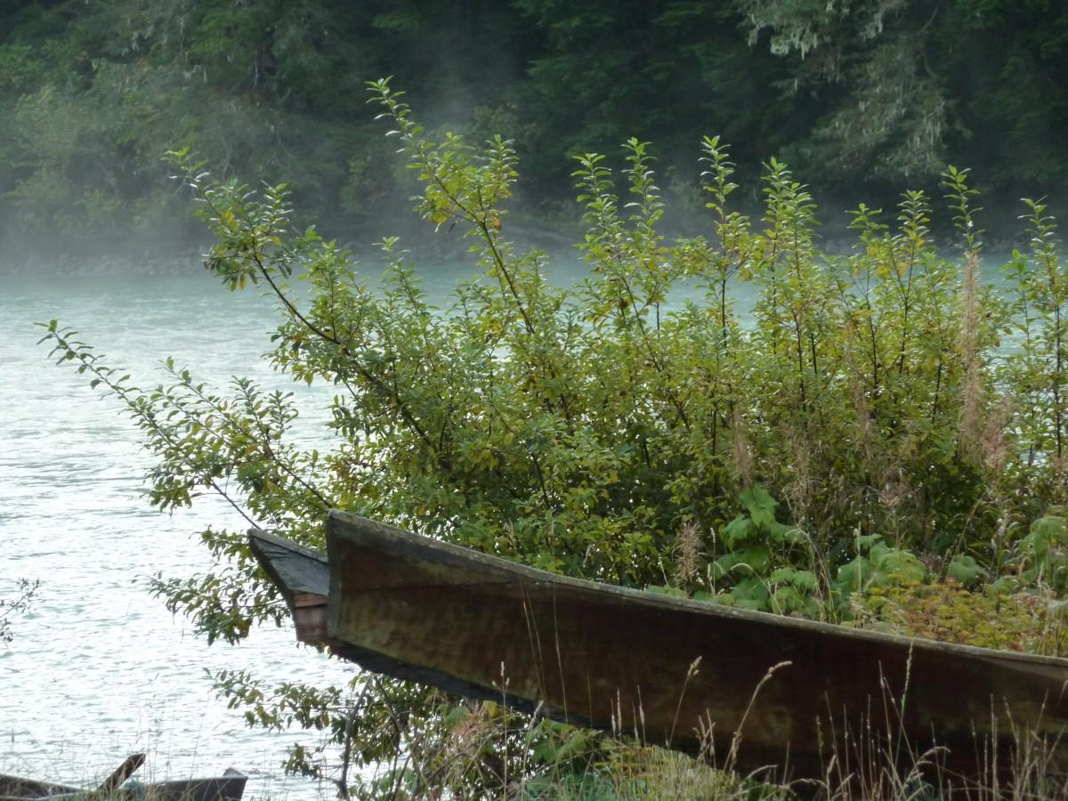 A traditional canoe with bushes behind it near the water