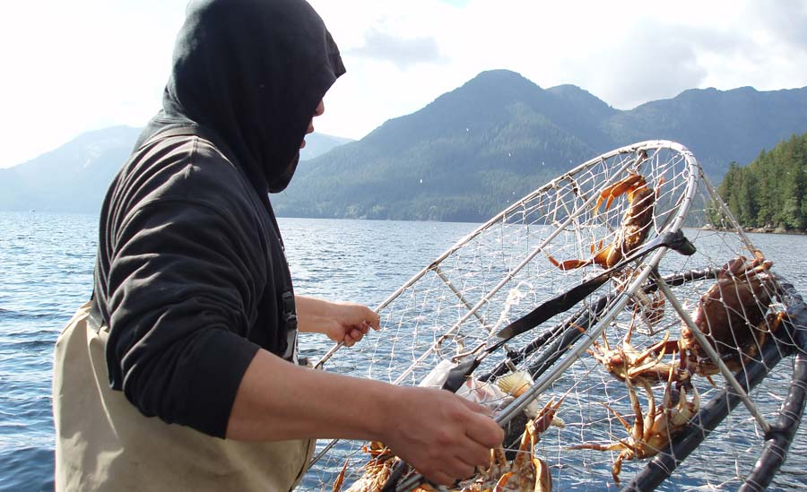 A guy pulls a crab trap for a survey from the water.