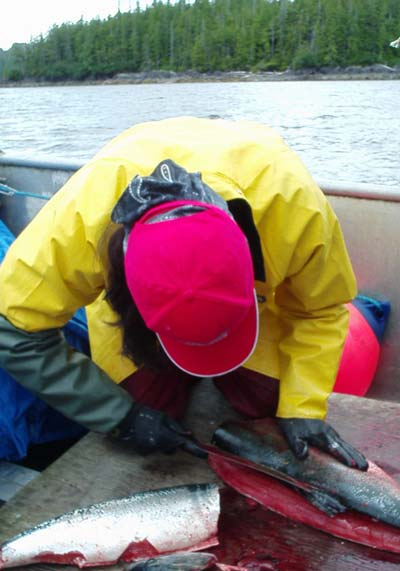 Cleaning salmon on the deck of a boat.