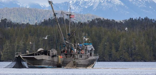Trust: A fundamental step towards collaborative fisheries management