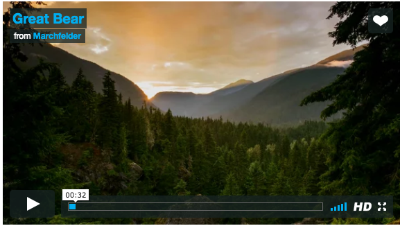 """""""Great Bear"""" film on Vimeo from Marchfelder"""