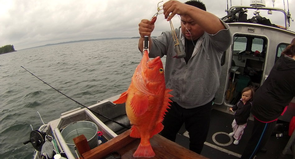Ernie Mason of the Kitasoo/Xai'Xais Nation weighing a Yelloweye rockfish
