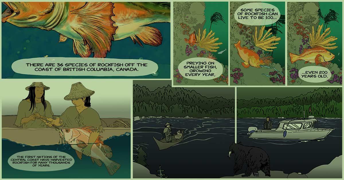 Rockfish montage