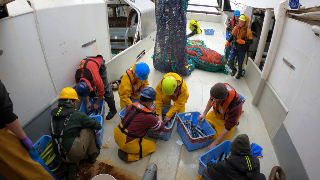 Sorting and identifying the catch on the deck of a ship.